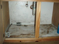 Bathroom Mold Problem - Before Mold Remediation | EMS | Chino, CA