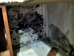 Before mold removal and remediation | kitchen mold growth | EMS | Southern California